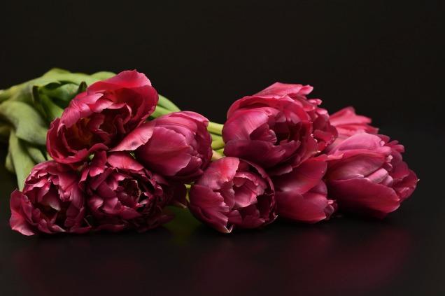 tulips-1198276_1920